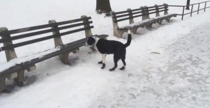 """""""Nie śmiej się dziadku z psiego wypadku"""""""