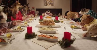 Wiglijna kolacja zwierząt - HIT INTERNETU!