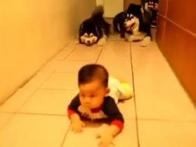 Młode husky raczkują z dzieciakiem