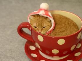 Kolekcjoner SŁODKOŚCI - kociak do wypicia