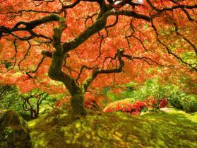 Najpiękniejsze zdjęcia jesieni z całego świata