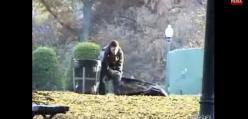 Wyrzucanie ciała w parku - KAWAŁ