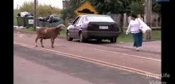 Gangsterskie zwierzęta - kompilacja