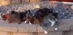 Kolekcjoner SŁODKOŚCI - szczeniaczki atakują kota