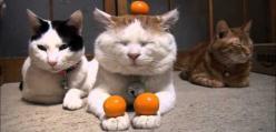 Ten kot jest Mistrzem Zen