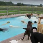Psia imprezka w basenie