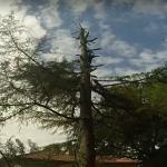 Wycinanie drzewa - oni prawie zginęli