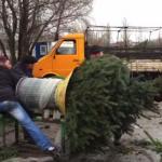 Pakowanie choinki Lublinem