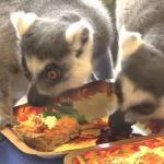 Kolekcjoner SŁODKOŚCI - wielka wyżerka lemurów