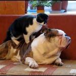 Koty masują psy - MIX