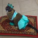 Kocia Jasmina - najlepsze przebranie w dziejach!