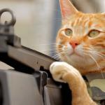 """Medal of Honor Cat"""