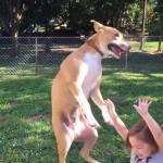 Ten pies zorientował się, że wyląduje na swoim małym człowieku