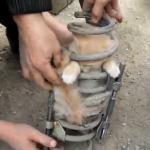 Najsłodszy kotek - utknął w sprężynie