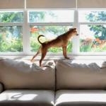 Adoptuj zwierzaka - świetna reklama!