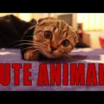 Najsłodsze zwierzęta w internetach - LUBIMY!