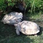 Żółw pomaga przyjacielowi - ŚWIETNE!