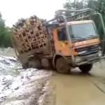 Mistrz zwożenia drzewa