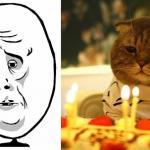 Koty wcielają się w memy - ŚWIETNE!
