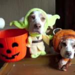 2 najbardziej nieszczęśliwe psy na świecie