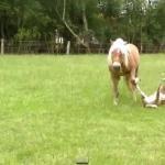 Najlepsze wpadki z udziałem zwierząt