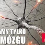 Fakt czy mit - Mózg