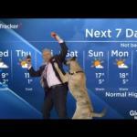 Pogodynek zaatakowany przez psa