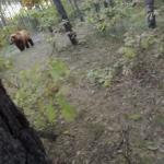 Rowerzysta o krok od niedźwiedzia!