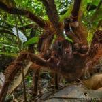 Oto największy pająk świata!