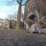 Mała złodziejka ukradła GoPro