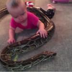 Dziecko bawi się... z pytonem!