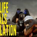 Gangsterskie zwierzęta - kompilacja część 1
