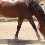 Dlaczego nie wolno karmić konia fasolą?