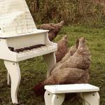 "Igorrr - ""My Chicken's Symphony"""