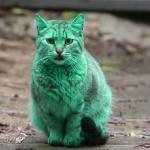 Zielony kot na ulicach Bułgarii