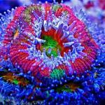 Najpiękniejsze zdjęcia rafy koralowej