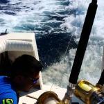 Chamski lew morski okrada wędkarzy