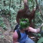 Goryl wyłudza banany w dżungli