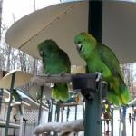 Te papugi kłócą się jak stare, dobre małżeństwo...
