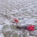 Pies wpadł do zamarzniętej rzeki - akcja ratunkowa