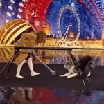 Utalentowany pies z Wielkiej Brytanii!