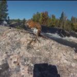 Na ratunek tonącej wiewiórce