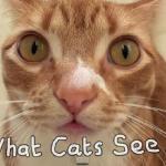 Tak koty widzą świat wokół siebie