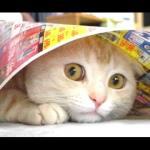 Najbardziej zabawne wystraszone koty