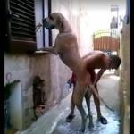 Kąpiel olbrzymiego psa - jak to się robi?
