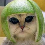 Koty Pierwotnego Zła - uwaga, STRASZNE!