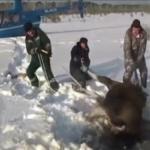 Ludzie ratują zwierzęta - CUDOWNY mix!