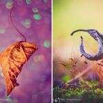 Alex Greenspun - najpiękniejsze zdjęcia jesieni!
