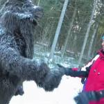 Uwaga, niedźwiedź!