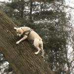 TreT-Style - parkourowy pies z Ukrainy!